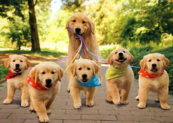 how many breeds of dogs are there in the world